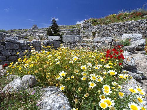 Blütenpracht in der Ausgrabung Alt-Theras