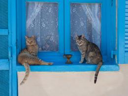Katzenfenster in Akrotiri. (c) Tobias Schorr
