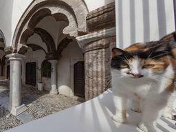 Katze an der größten Kirche in Emporio-Kastell.