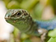 Auch Reptilien sind ein Fotomotiv für gedultige Fotografen (c) Tobias Schorr