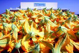 Traditionelles Gericht: Zucchini-Blüten werden lecker gefüllt und gebraten.